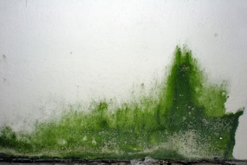 Free Stock Photo of Green goo on the wall