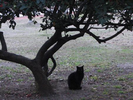 Free Stock Photo of Black cat under a tree