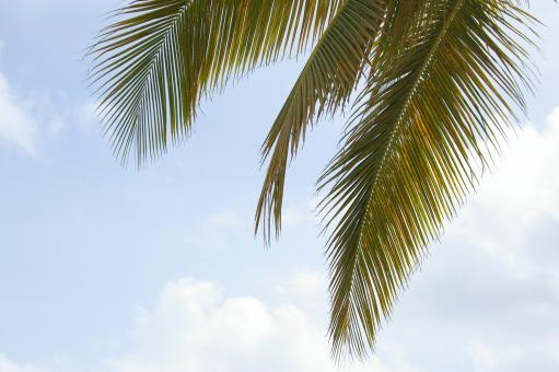 Free Stock Photo of Palm tree and the sky