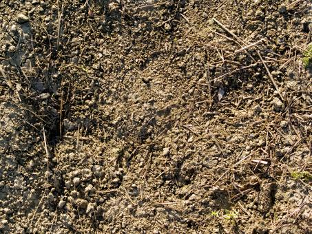 Free Stock Photo of Ground Dirt