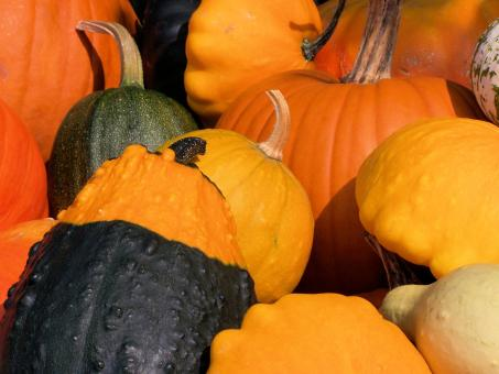 Free Stock Photo of Colorful pumpkins in fall