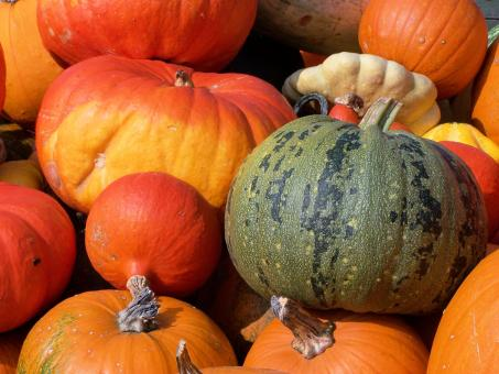 Free Stock Photo of Colorfull pumpkins in fall