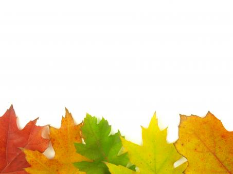 Free Stock Photo of Autumn Leaves - Bottom Frame