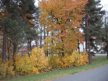 Free Stock Photo of Fall 2008 in Sweden