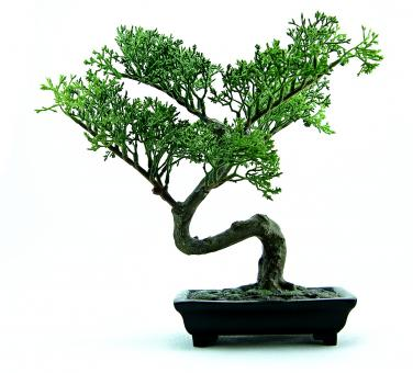 Free Stock Photo of Green plastic bonsai