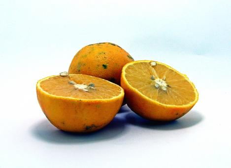 Free Stock Photo of Orange fruit