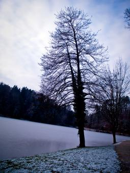 Free Stock Photo of Lake tree