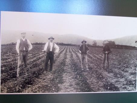 Free Stock Photo of 19c Strawberry pickers  Hook/ Butlers Be