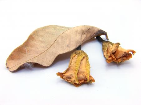 Free Stock Photo of Old Dry Leafs