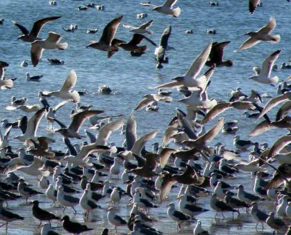 Free Stock Photo of Way Too Many Gulls