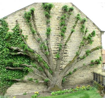 Free Stock Photo of Tree agains a wall