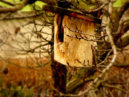 Free Stock Photo of Bird-Box