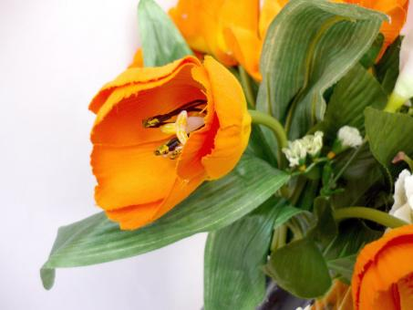 Free Stock Photo of Orange Tulips