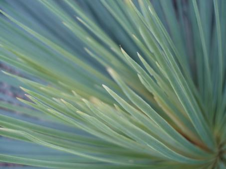 Free Stock Photo of Green Fronds