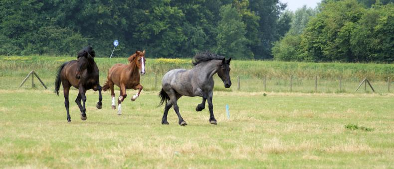 Free Stock Photo of Horses in the Netherlands