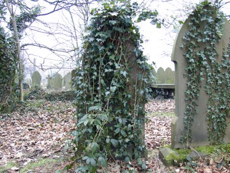 Free Stock Photo of Grave Stone with Ivy Vine