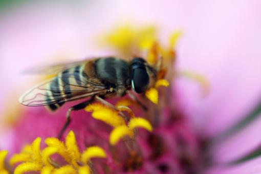 Free Stock Photo of Hard Working Bee