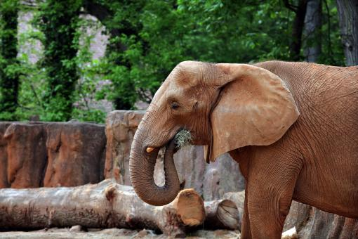 Free Stock Photo of Elephant at the Zoo