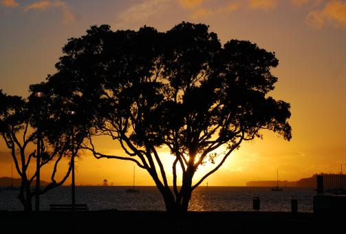 Free Stock Photo of Pohutukawa Sunset