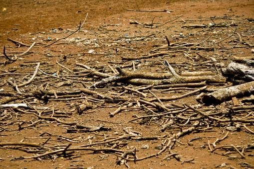 Free Stock Photo of Dead Drought Tree