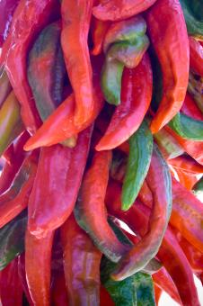 Free Stock Photo of Hanging Chilies