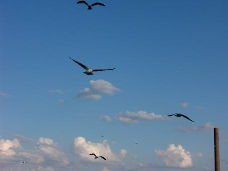 Free Stock Photo of Bird Flight