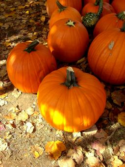 Free Stock Photo of Pumpkins!
