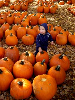 Free Stock Photo of Little Boy in a Pumpkin Patch