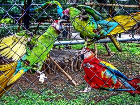 Free Stock Photo of Zoo parrots