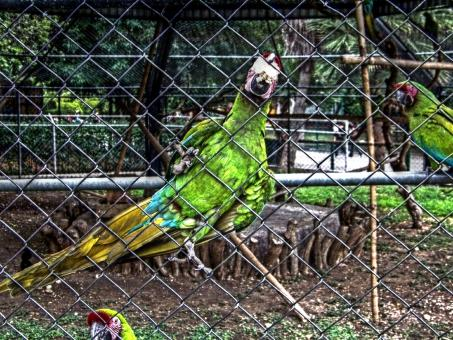 Free Stock Photo of Zoo parrot