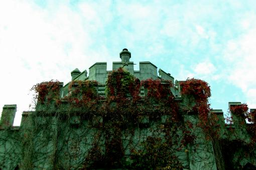 Free Stock Photo of Ivy covered castle wall