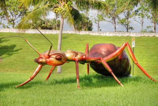 Free Stock Photo of Giant Ant, West Palm Beach, Florida, Jan