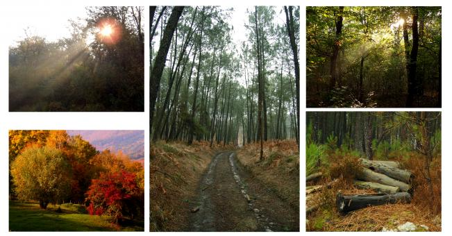 Free Stock Photo of Forest collage