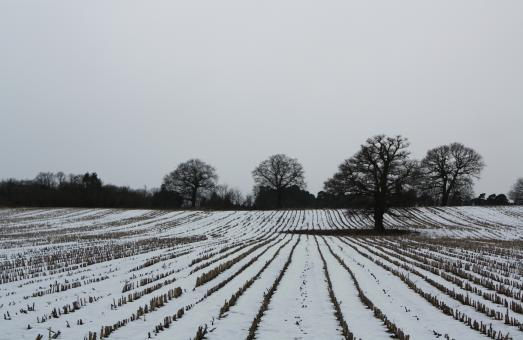 Free Stock Photo of Winter fields