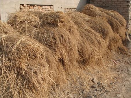 Free Stock Photo of Pile of hay