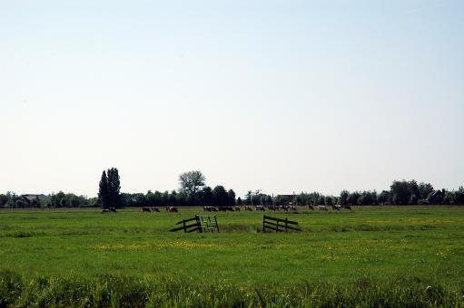 Free Stock Photo of Dutch Farmland
