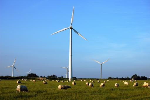 Free Stock Photo of Sheeps and windmills
