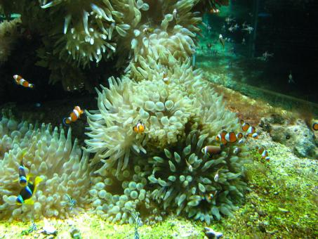 Free Stock Photo of Aquarium in oceanographic museum in Mont