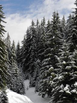 Free Stock Photo of Winter Wonderland in Central Rhodopes