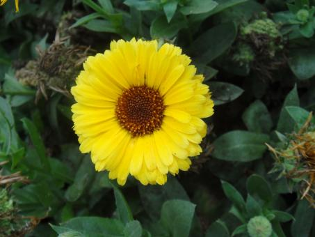 Free Stock Photo of Yellow Sun Flower