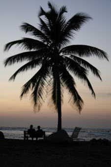 Free Stock Photo of Palm Tree Silhouette