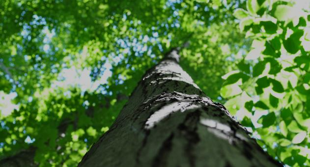 Free Stock Photo of Tree top