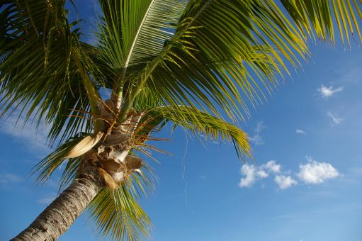 Free Stock Photo of Holiday martinique