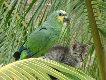 Free Stock Photo of Bird and Cat on Palm Tree