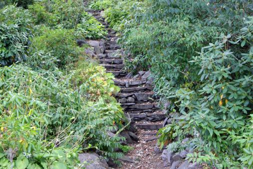 Free Stock Photo of Nature's Stairway