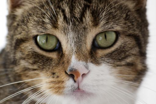 Free Stock Photo of Cat closeup