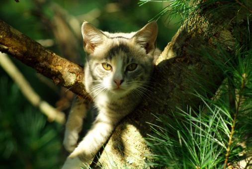 Free Stock Photo of Cat In Tree