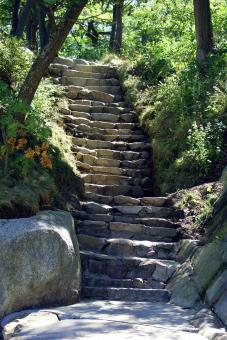 Free Stock Photo of Nature's Stairway II