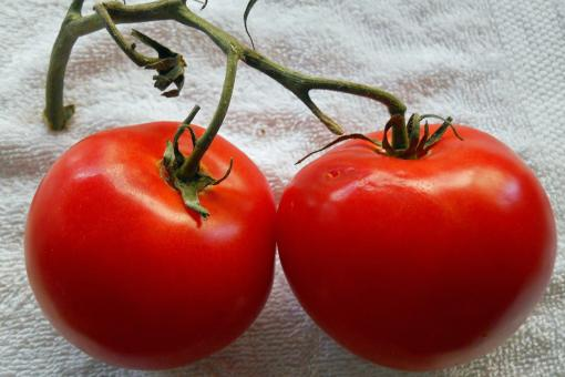 Free Stock Photo of Two juicy tomatoes