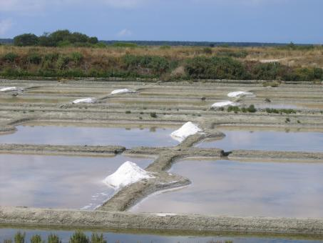 Free Stock Photo of Salt Marsh
